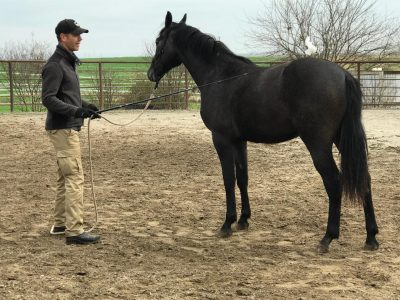 Horse-Development5