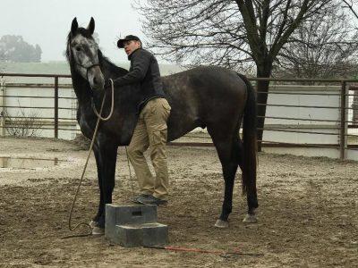 Horse-Development4